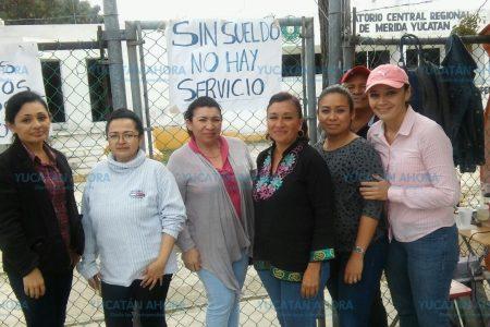 Exhortan a solucionar el problema fitosanitario en Yucatán