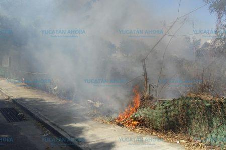 Incendio propicia desalojo de Bodega Aurrerá y escuela en Francisco de Montejo