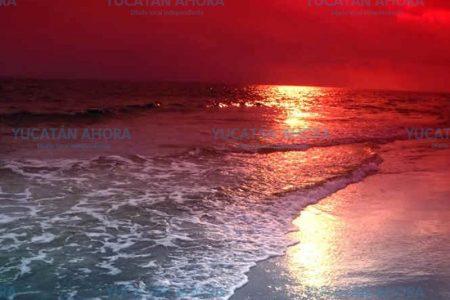 Mareas rojas más intensas debido al cambio climático y contaminación
