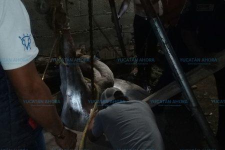 Tragedia equina en Reparto Granjas: yegua cae a un pozo de 8 metros