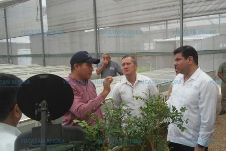 Con métodos naturales, mantienen a raya las plagas en Yucatán
