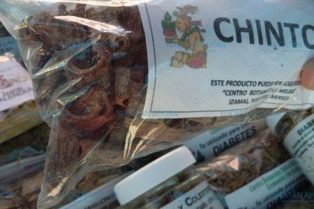 Chintok, el 'rompepiedras' maya para curar los riñones