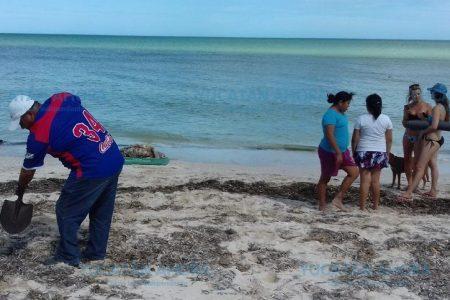 Nueva señal del mar: recala tortuga muerta en Chixculub Puerto
