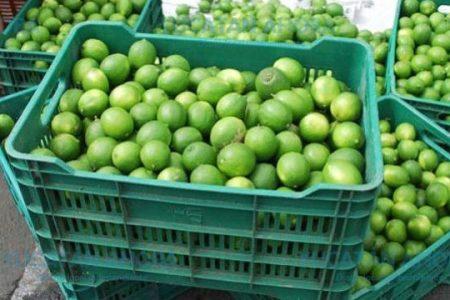 Hoy día un limón te puede costar entre 10 y 15 pesos en Mérida