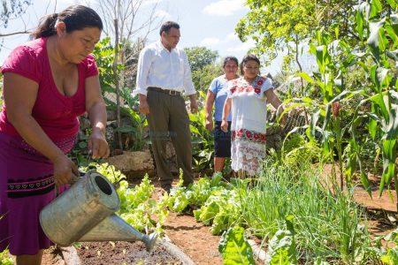 Miles de familias yucatecas han mejorado su estilo de vida con huertos en el patio de su casa