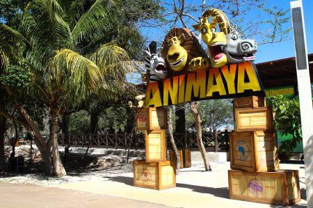 Este lunes de asueto sí trabaja Animaya, pero el Centenario no