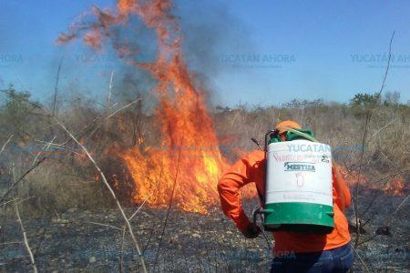 Van 603 incendios forestales que han siniestrado  402 hectáreas