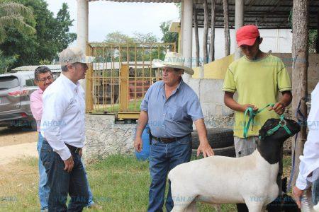 Sagarpa impulsa nueva productividad en el campo de Yucatán