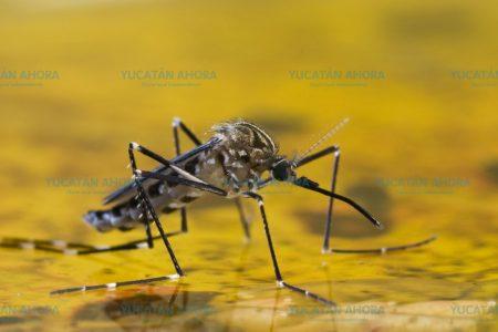 Yucatán, a la expectativa ante la inminente fiebre amarilla