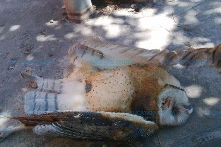 Se vuelve viral muerte de ave ya casi desaparecida en Mérida