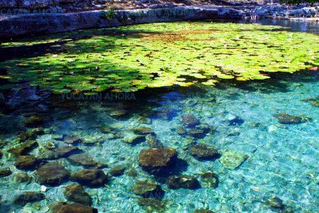 El cenote de Dzibilchaltún revela nuevos secretos