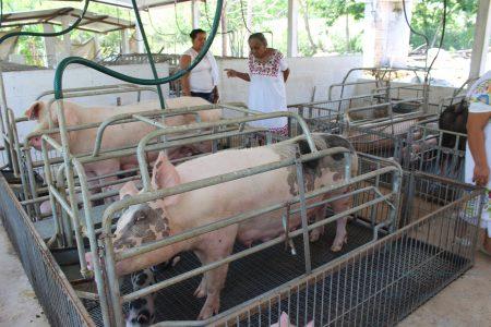Más unidades agrícolas se interesan por la tecnificación del campo