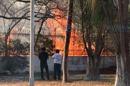 Incendio en el Psiquiátrico daña 20 árboles y huerto de maíz en poco más de una hectárea