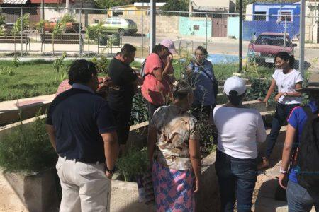 Buena respuesta del primer huerto urbano en Mérida