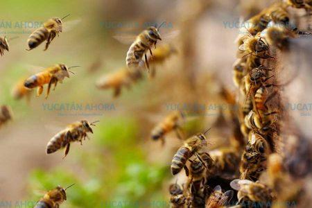 La apicultura, dulce actividad en un entorno amargo