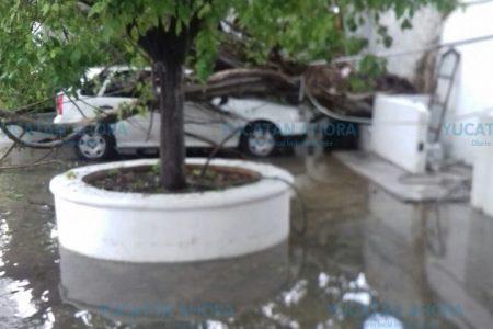 Esta tarde vio llover… y un árbol caer sobre su auto en Itzimná