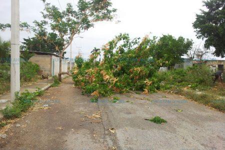 Árboles caídos, herencia del frente frío 44 en Mérida