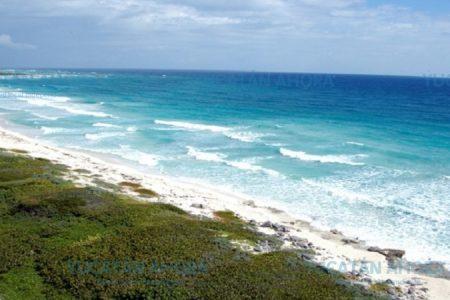 Restauran dunas costeras en Quintana Roo
