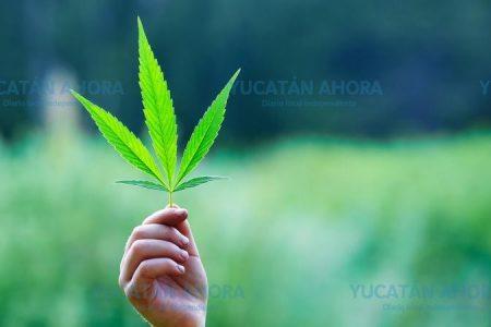 Anuncian marcha por la legalización de la marihuana