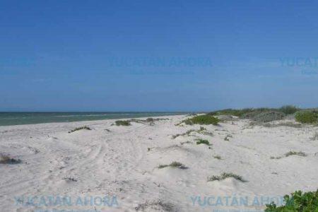 Los sancionan por arrancar matorral costero en Telchac Puerto