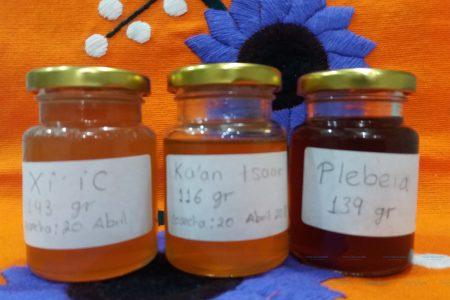 Promueven el consumo de la miel maya