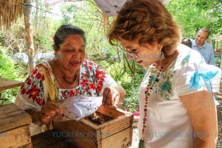 Invierten para que apicultores de Mérida produzcan más con más calidad