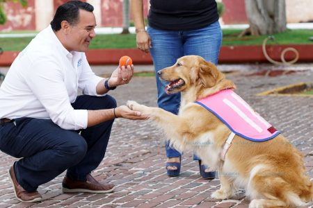 Renán Barrera buscará mecanismos para la sana convivencia entre personas y mascotas
