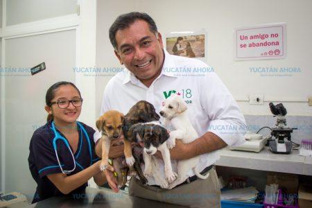 Plantea Víctor Caballero la estrategia contra el sacrificio de perros callejeros