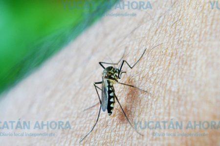Guerra biológica contra el mosco del dengue en Yucatán