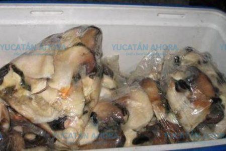 Atrapan a pescadores furtivos de caracol blanco, especie en veda permanente