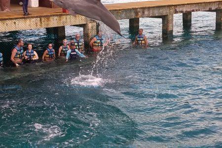 Nadar con delfines, una experiencia inolvidable