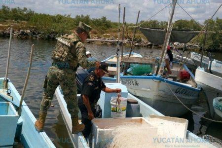 Golpe a la mafia de pesca furtiva en Yucatán