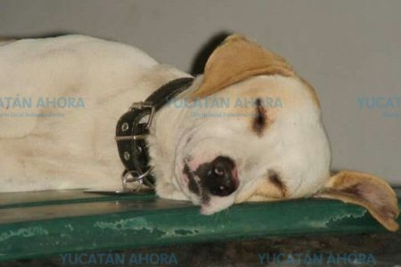 Da su versión el dueño de 'Muñeco', el perro fallecido tras ser atropellado