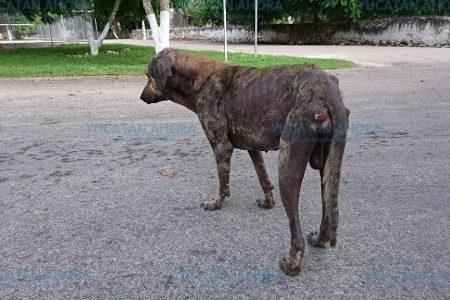 En Mérida deambulan 64 mil perros y gatos callejeros