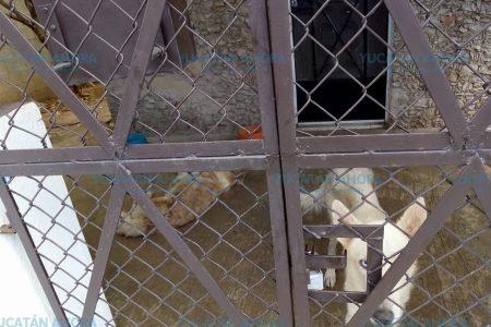Polémica por dramática imagen que circula en redes de unos perros enfermos