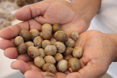 Semillas de ramón, esenciales para la dieta humana