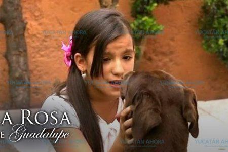 La Rosa de Guadalupe, el programa que más ven los niños meridanos