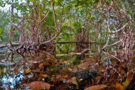 De plantío abandonado a oasis en el norte de Mérida