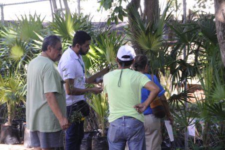 Vienen las lluvias, planta tu árbol: venta especial en el CICY