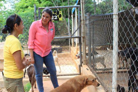 Tenemos que hacer leyes contra el maltrato animal: Linett Escoffié