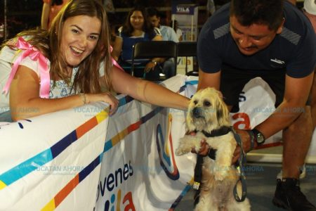 Ofrece Cecilia Patrón trabajar en leyes de protección animal