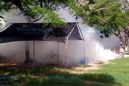 Desde Celestún hasta El Cuyo le darán duro al mosco del dengue