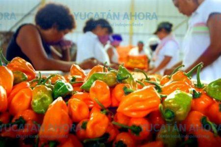 El chile habanero, suplemento alimenticio para los estadounidenses