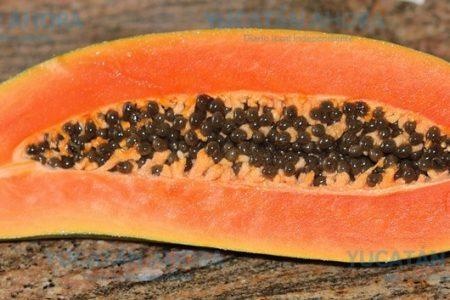 'Indigestiones' de Trump afectarían exportaciones de papaya yucateca