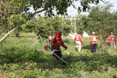 Librarán del mosco transmisor del dengue el Paseo Verde y Paseo Henequenes