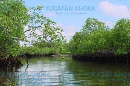 Urge un nuevo plan de ordenamiento ecológico de las costas yucatecas