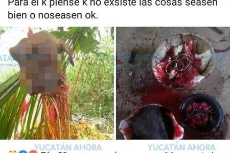 Denuncian a 'El Diablo': sacrifica animales y lo publica en Facebook