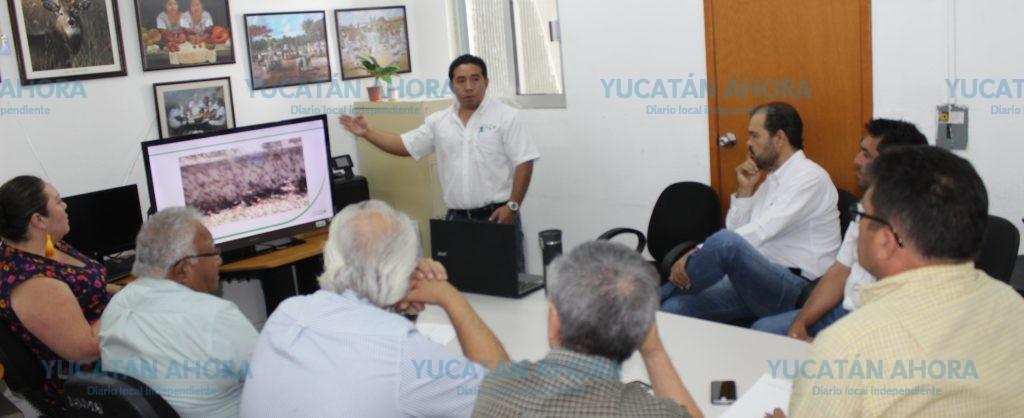 Controlada por el momento en Yucatán la plaga de langosta más antigua