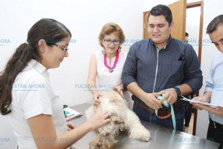 ¿Sabías que puedes esterilizar a tu mascota con solo 100 pesos?