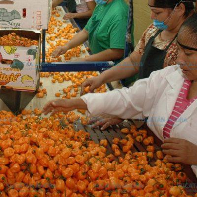 Un nuevo logro para el chile habanero de Yucatán